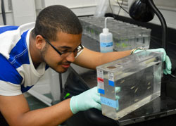 Evan Brooks '18 conducting research on zebrafish at the Tufts University Sackler School of Graduate Biomedical Sciences - Summer 2015